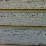 Mold, mildew and algae on vinyl siding